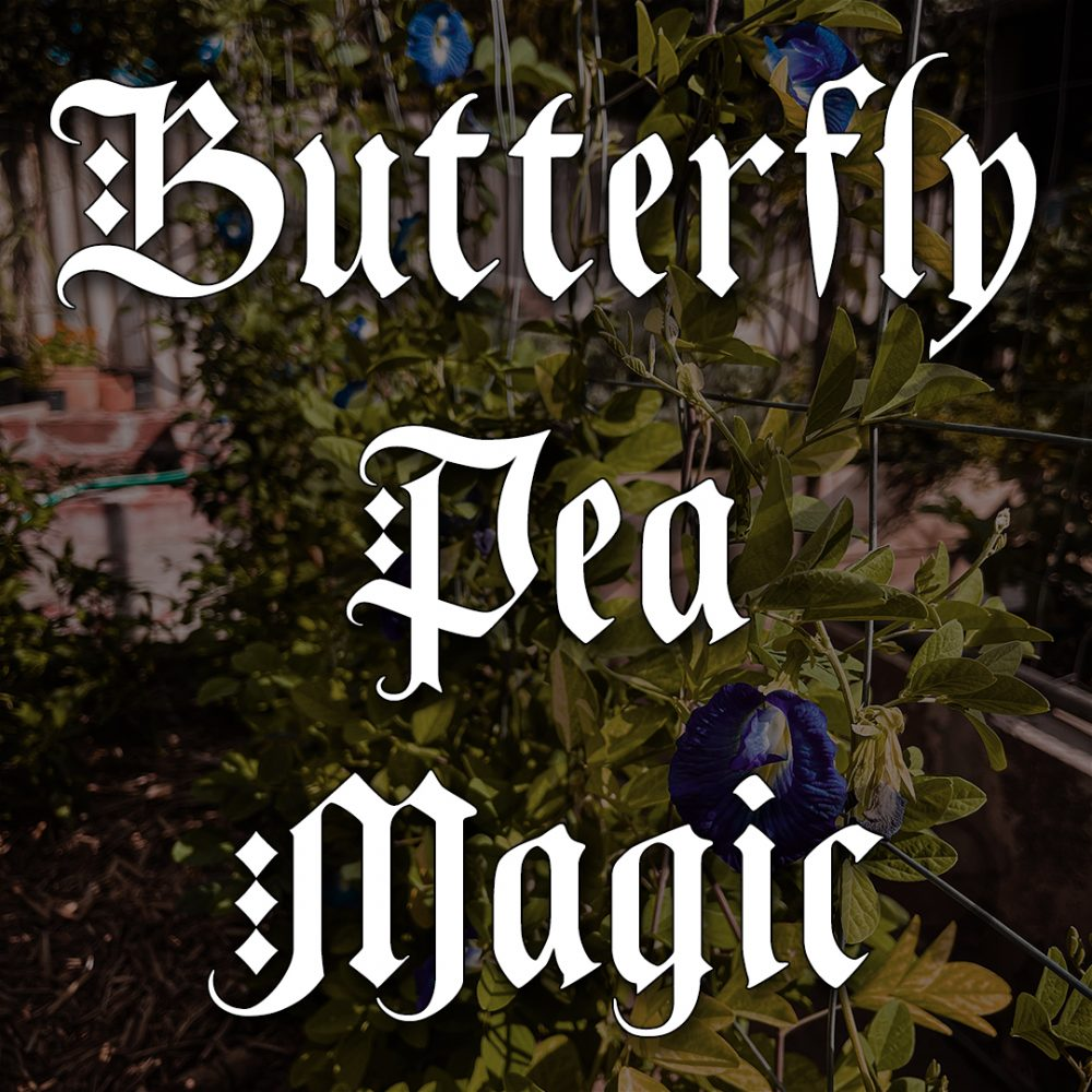 butterfly pea magic, pagan supplies, australian witchcraft supplies, witchcraft blog, adelaide witchcraft store, herbalism, butterfly pea uses, butterfly pea names